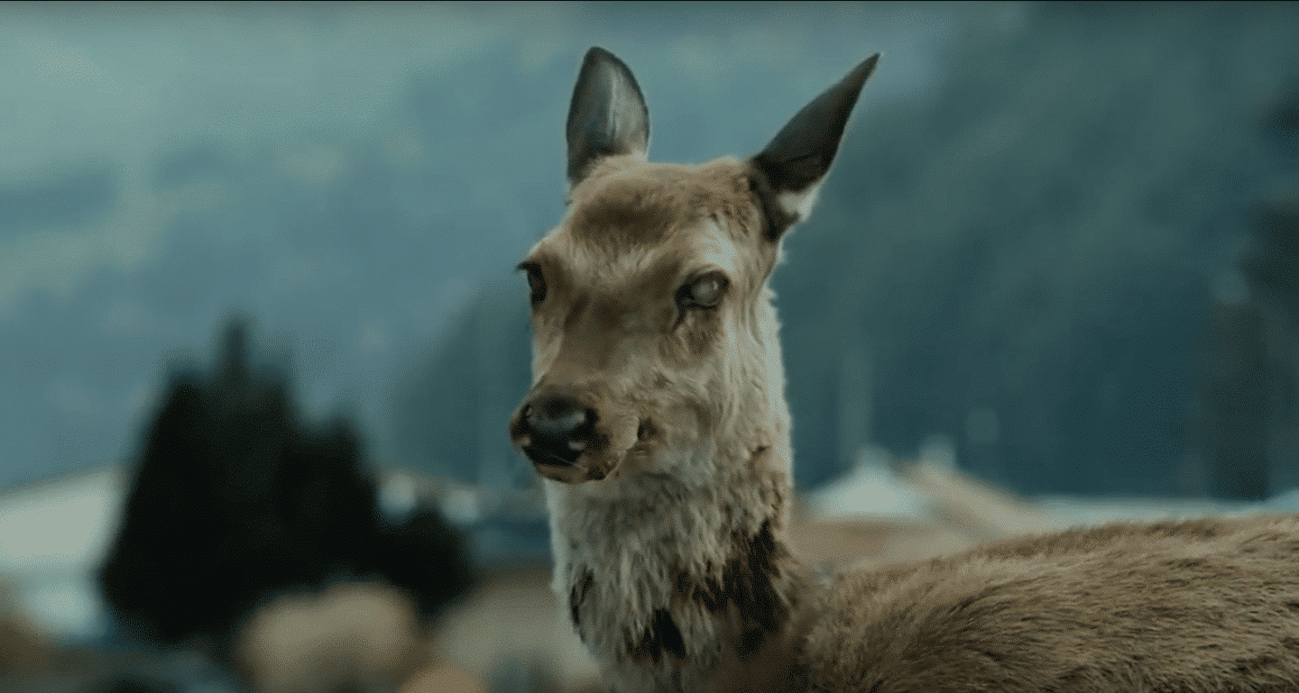 a deer from the movie 'Train to Busan'