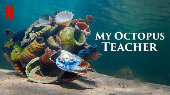 poster for My Octopus Teacher